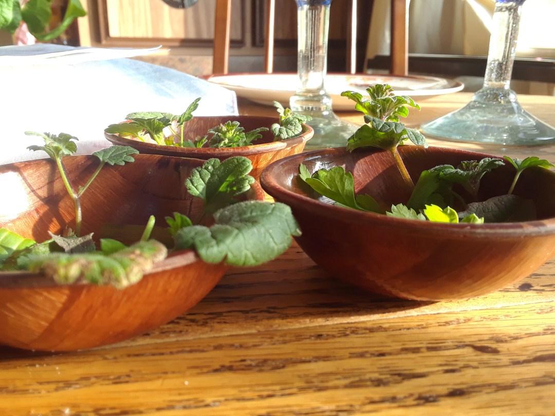 tiny salads