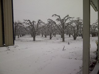 Songdove Books - Orchard in Snow