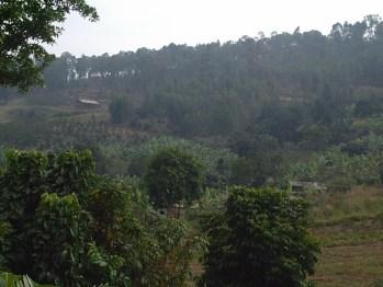 Songdove Books - Rwandan Orchards