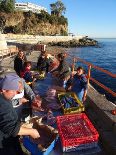 VALPARAISO / Bivouac à la Caleta Membrillo - Anna achète 8 merluza, puis les fait vider par l'une de ces dames, puis enfin achete un sac plastique pour le ramener au camping-car