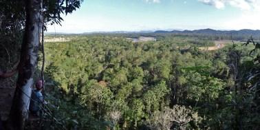 PN MADIDI / Dans la selva (jungle) : mirador d'observation des paracas