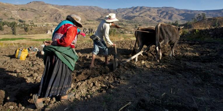 CANYON DE COLCA / Balade sur les hauteurs de Yanque : C'est la grand-mère qui sème minutieusement les graines de maïs