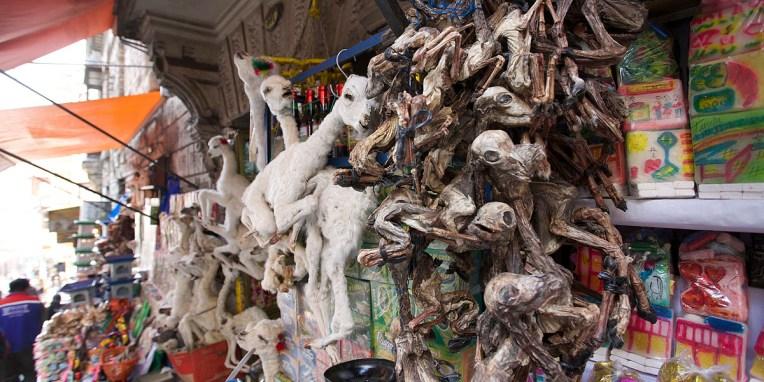 LA PAZ / Vous avez deviné ? Ce sont des foetus de lamas à enterrer dans les fondations d'une maison en guise de cha'lla (offrande) à Pachamama afin qu'elle vous porte chance. Jusqu'à pas si longtemps, on enterrait des cadavres de clochards dans les fondations d'immeubles…
