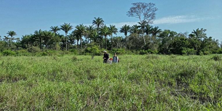 PN MADIDI / Dans les marais : où es-tu petit boa ?! (©Maluck)