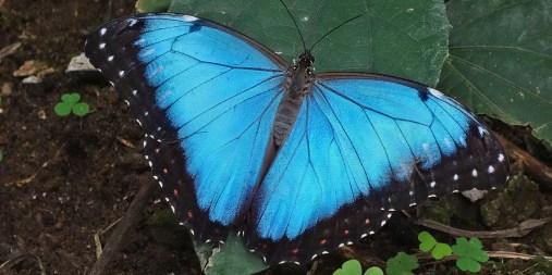 MINDO / Ferme de papillons - ouvert