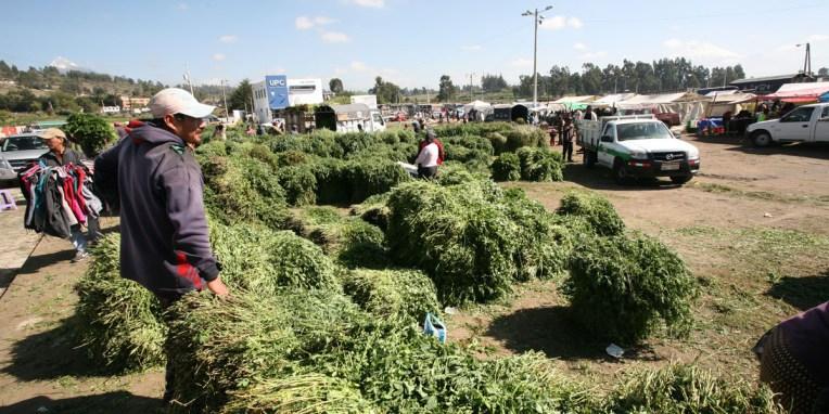 SAQUISILI / Dans un coin du marché aux bestiaux, des bottes d'herbes divers et variées pour nourrir les bêtes achetées sur place