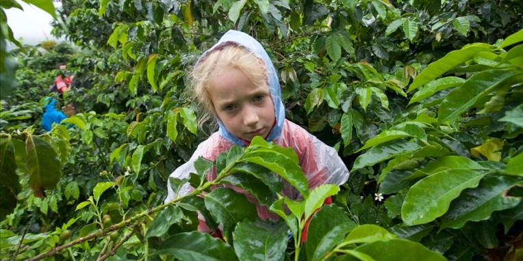 SALENTO / Finca de café : la pluie fait moins rire Anna…