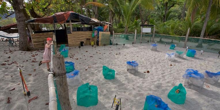 MONTEZUMA / Relâché de 99 tortues : nurserie du programme de protection des tortues marines.