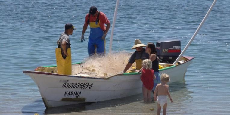 BAHIA LOS ANGELES / Bivouac La Gringa - poisson frais auprès des pêcheurs qui posent des filets près de la plage