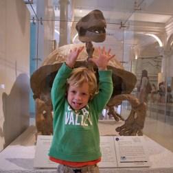NYC / Attaque de tortue géante !