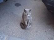 050-Cat