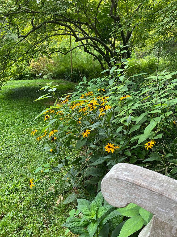 Peaceful garden setting