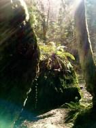 Squak Mountain, March 23, 2013,