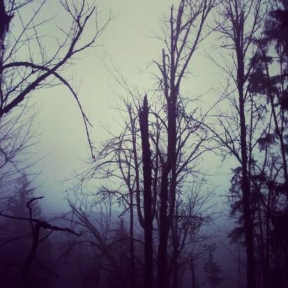 Squak Mountain, December 7, 2012