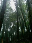 Cougar Mountain, December 16, 2012, 8 miles