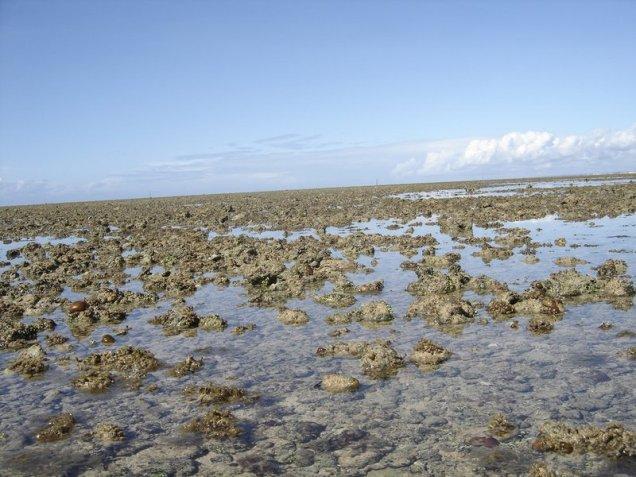0690-6o-dia-passeio-de-escuna-recife-de-fora-ouricos
