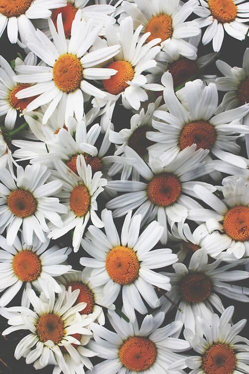 wallpaper-florais-para-o-seu-celular-6