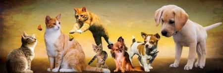 Dog- cat pIxababy