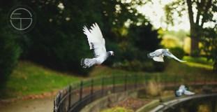 birds copy 2