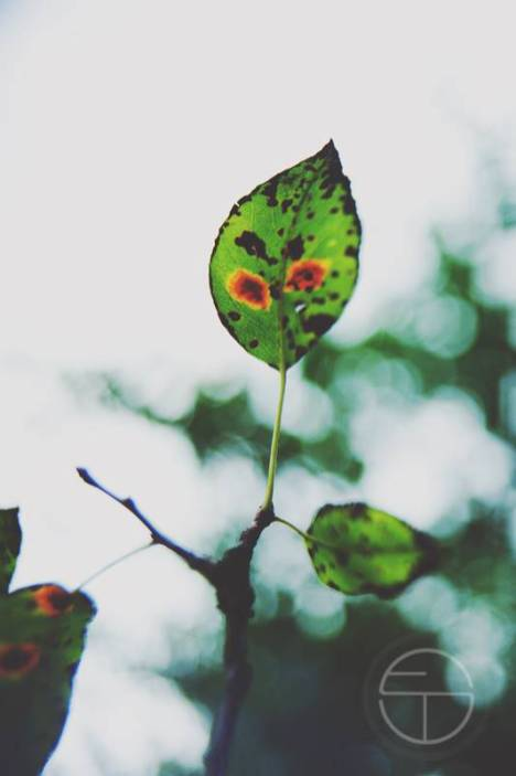 sonia-epple-fotografie