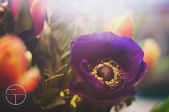 februar 2016 blumen 4freunde daisy schnee_0951 copy