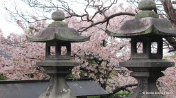 Lanterns and Blossoms