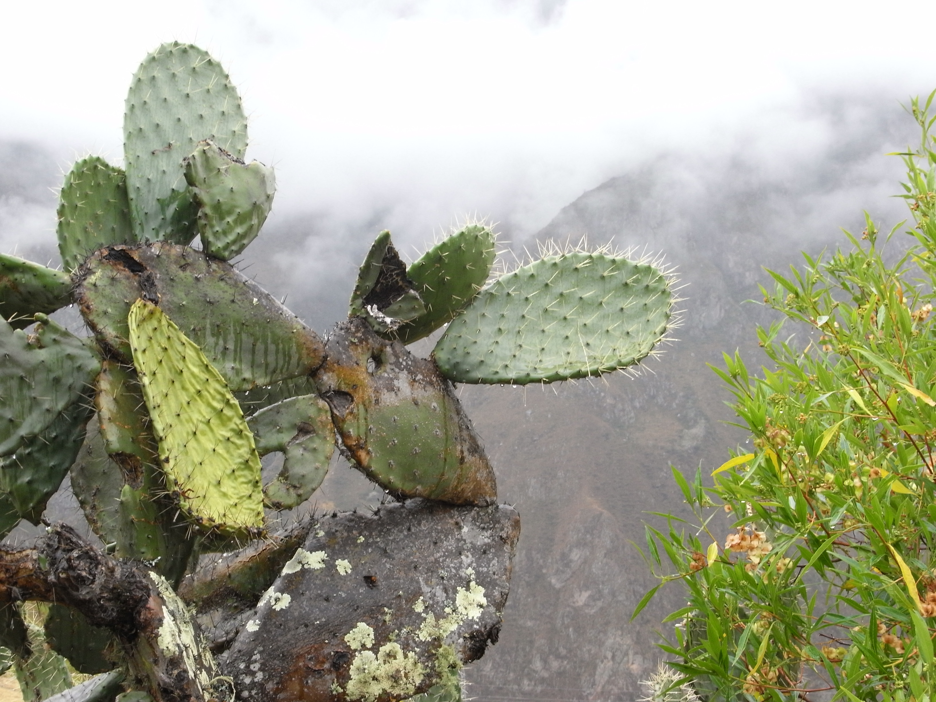 cactuses in the Andes...who would have thought