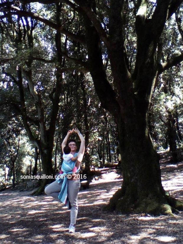 albero yoga