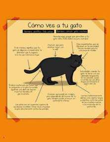 gato planea matarte