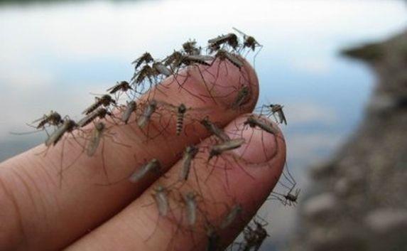 К чему снятся комары - комары в большом количестве во сне сонник