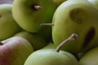 One of my first macro attempts was apples...