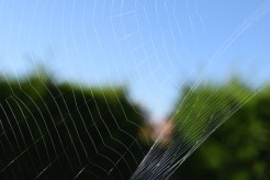 Slightly different to the other web shot, the de-focus of the background is nice here.