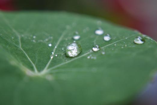 Wassertropfen Regen Tropfen Blatt Kapuzinerkresse Balkon