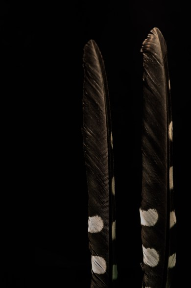 Mittelspecht, feather, Makro, b&w, minimal, minimalist