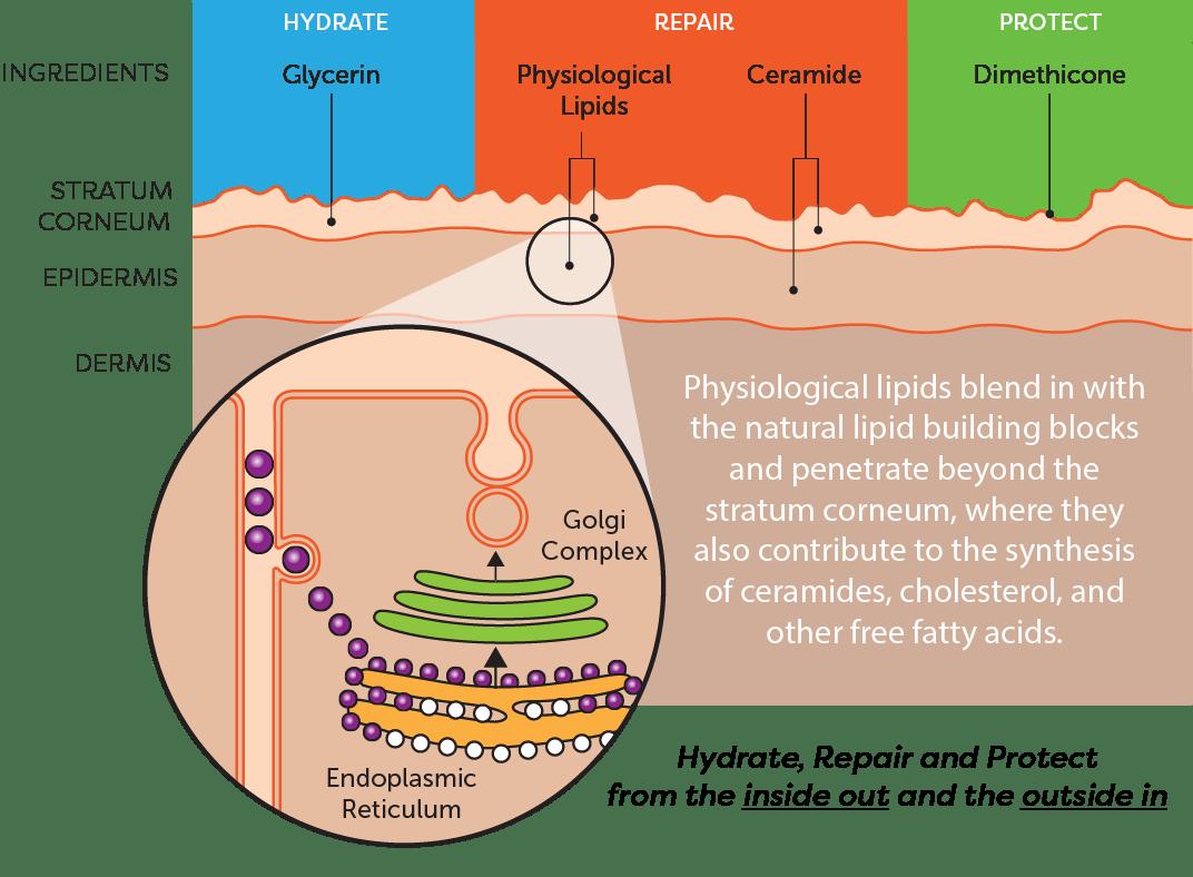 hydrate, repair, protect
