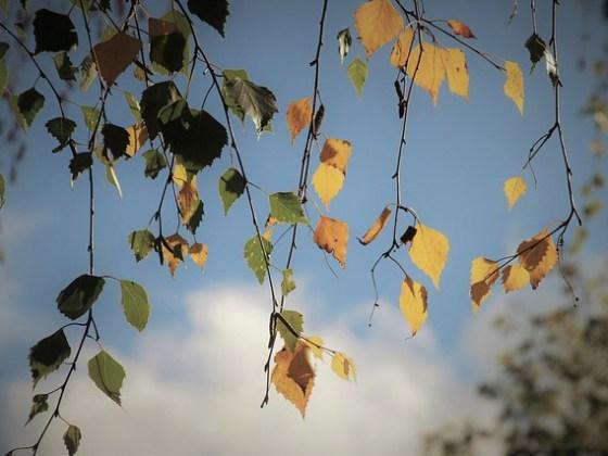 Árboles contra el cambio climático