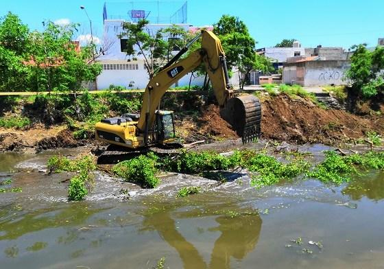 Tala de mangle en Mazatlán