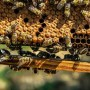 agroquímicos matan abejas