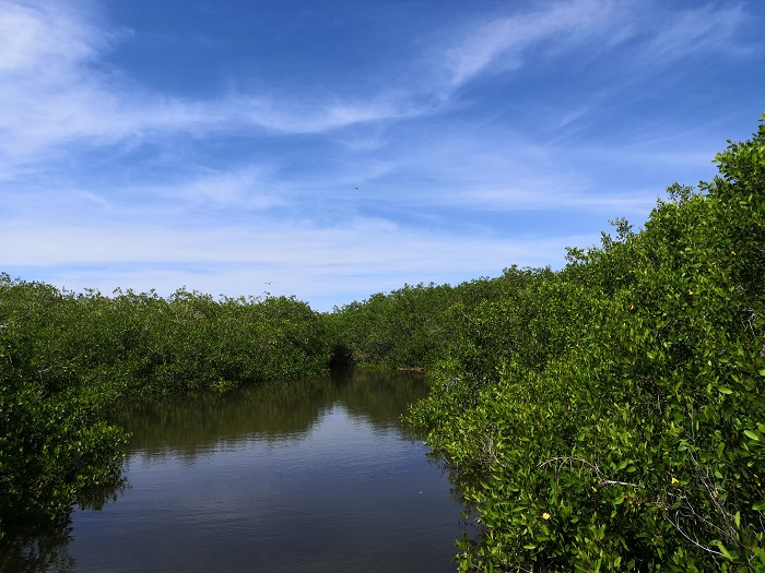 Humedal El Verde Camacho
