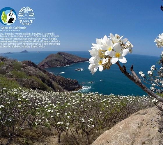 Islas del golfo de california