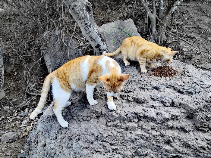 gatos faro Mazatlán