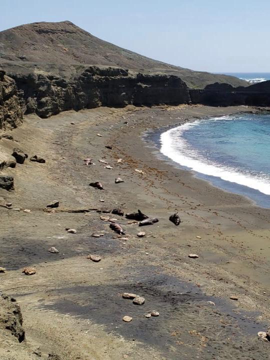 Lobos marinos de California BCS