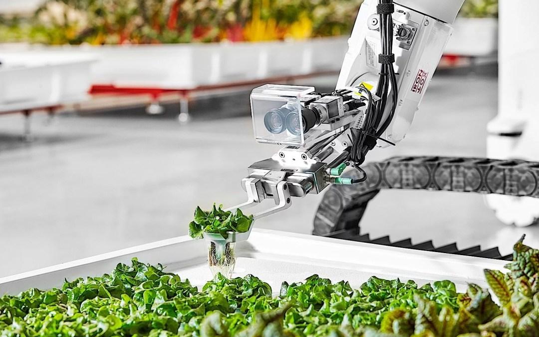 El futuro de la agricultura en granjas verticales