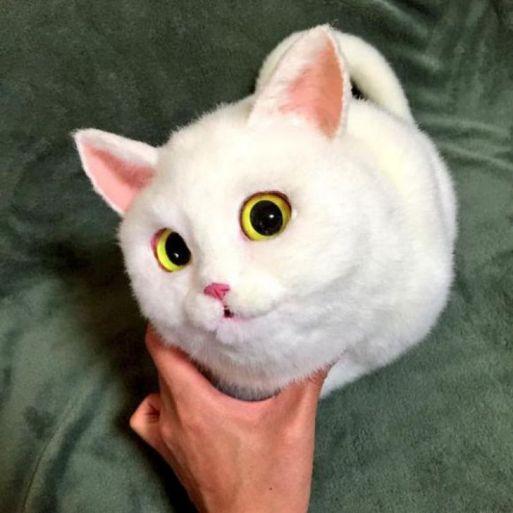 Bolsos de gato