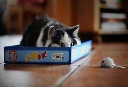 Gatos y ratones