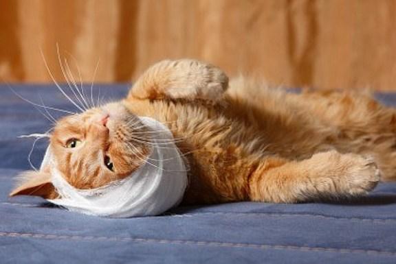 Gatos enfermos