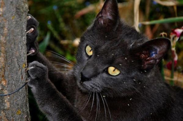 Gatos y uñas