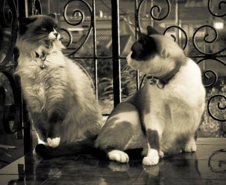 Sonrisas de gato