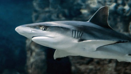 Assassini di squali 🦈