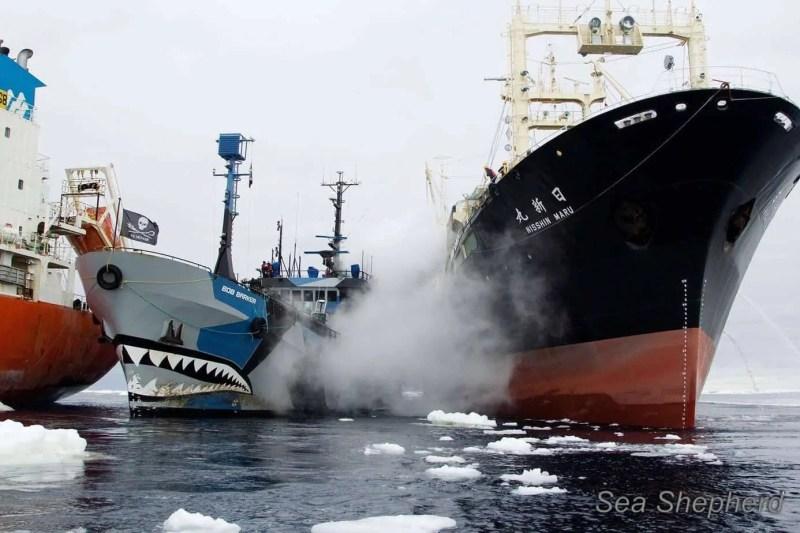 Il Giappone si ritira dal IWC per tornare a cacciare balene